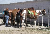 4-H Members Grooming Horses for the Fair