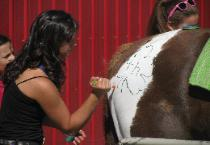 Applying a Special Logo to Her Horse